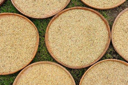 Rice Paddy Drying photo