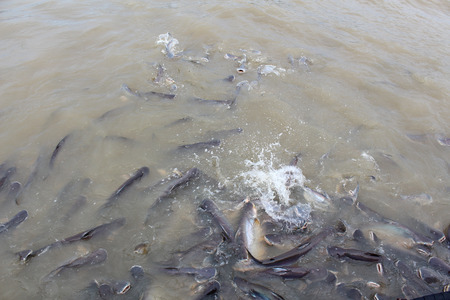 Fish of thailand photo
