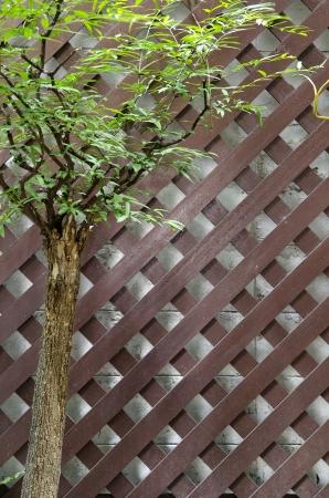 Green tree with brown wood cross photo