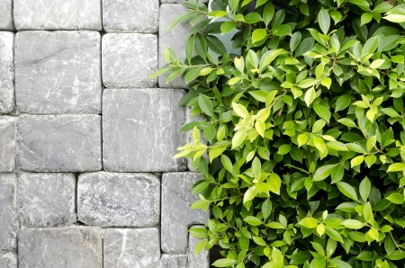 concrete block: The new design of modern wall with green leaf