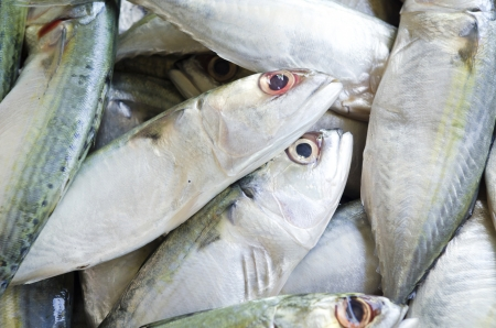 Fresh raw mackerel fish in market  photo
