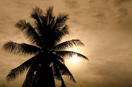 taken: Palms and sun, tropical sunset taken in bangkok, thailand