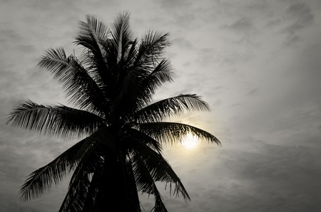 Palms and sun, tropical sunset taken in bangkok, thailand    photo