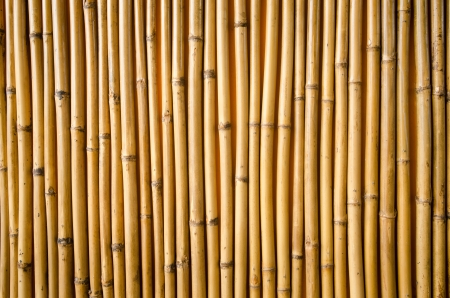 bamboo fence background    Stock Photo