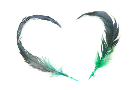 Feathers of love shape heart isolate on white background .  photo