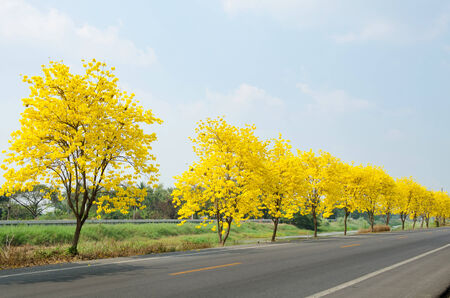 country road with yellow flowers photo
