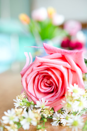 Roses bouquet and small white flower ,petals background.