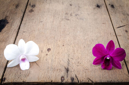 purple orchid: Pink and white orchid  Phalaenopsis   on a wooden background