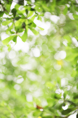 abstract green leaf bokeh  background