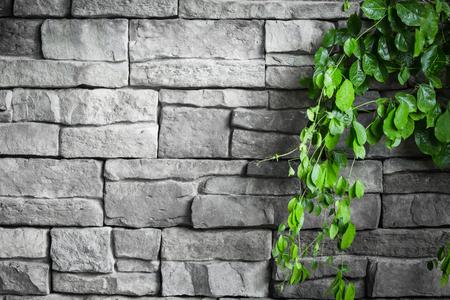 brick wall with green creeper plants