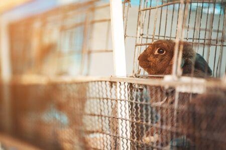 Sad imprisoned rabbit behind metal bar. Stock Photo