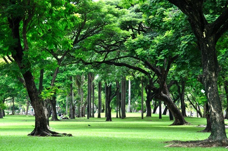 Green Park in City