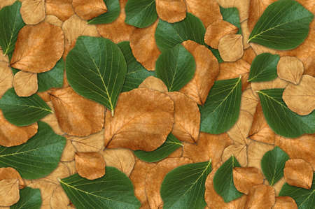 Green and dry leaf Background photo