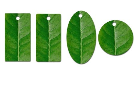 Hang tag by green leaf