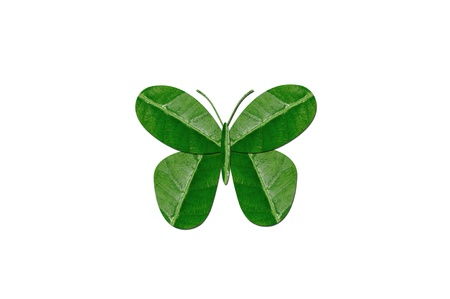 butterfly by green leaf Stock Photo - 15848988