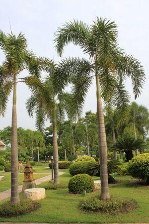 zpevněné: Foto Plam Trees - Tropical Landscape v Thajsku. Reklamní fotografie