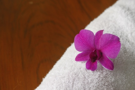 Orchid  and white cotton on brown background Stock Photo - 10451508