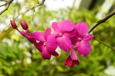Pink orchid growing on tree after falling rain photo