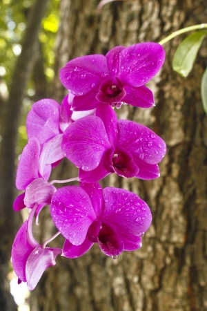 Pink orchid growing on tree after falling rain Stock Photo - 11477400