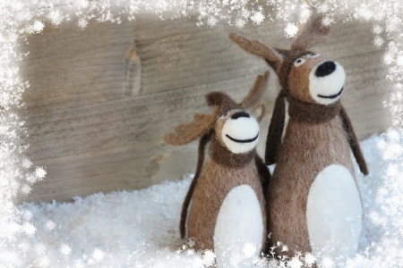 Christmas reindeer photo