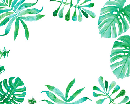 tropical garden: Watercolor drawing, palm trees or green leaves Illustration