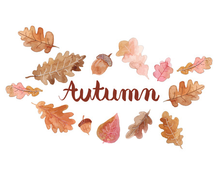 quercus: Beautiful background of autumn leaves. Autumn background. Autumn set.