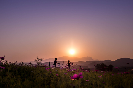 Sunset or sunrise scenery with silhouette of two sister on bicycle, mountain as background, pink cosmos as forground, Women  travel lifestyle outdoor concept