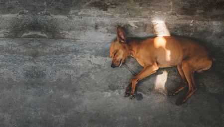 Brown Puppy Dog Sleeping on the Floor, Outside the house. Top View Banco de Imagens