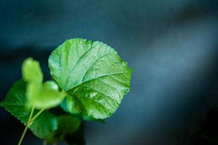 Green Leaf in Dramatic Light. Selective Focus
