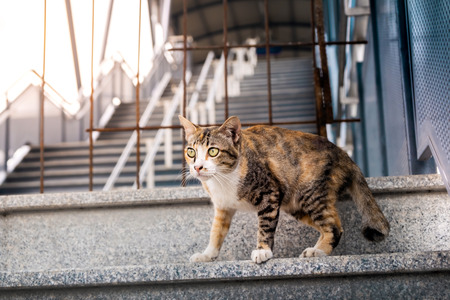 Stray Cat in the Urban. Brown Striped Cat