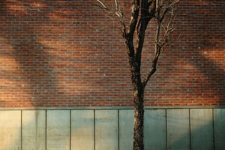 Brick Wall and Dry Tree with Natural Light Shading. Outdoor Scene, Modern Industrial Loft Design