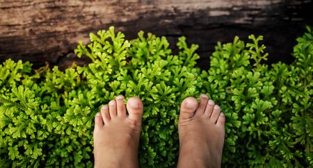 Kids with Nature Concept. Children Feet Standing on Natural Green Grass in Park. Girl Barefooted Walk the Garden. Top View