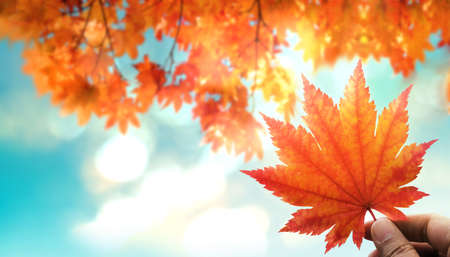 Beauty in Nature Concept. Sunny Day in Fall Season. Hand Raised up a Red Maple Leaf into the Sky. blurred Red, Yellow, Orange Foliages in Autumn as background