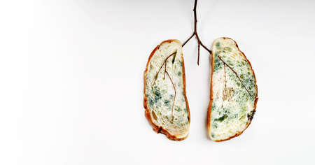 Lung Cancer. Unhealthy Pulmonary Disease created by Expired Bread with full of Mold and Dry branch. Stock Photo