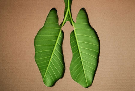 Environment and Ecology Conservation Concept. Green Wellness Lung Created by Leaf, Health Care, Medical, Coronavirus and Covid-19. Renewable and Zero Waste. Sustainable Resources for  Fresh Air