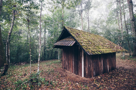 Abandon forester wooden hut in deep forest landscape.