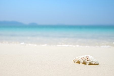 Sea shell on wave blue sea sand beach. Summer holiday background with copy space. 免版税图像