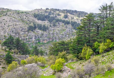 Bsharri, Lebanon - located in the Kadisha Valley and the Cedars of God is one the last vestiges of the extensive forests of the Lebanon cedar that once thrived across the country Banque d'images