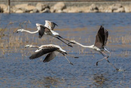 Van, Turkey - at the border with Iran, Van and its wonderful lake are splendid places to visit, with a stunning wildlife. Here in particular a colony of flamingos