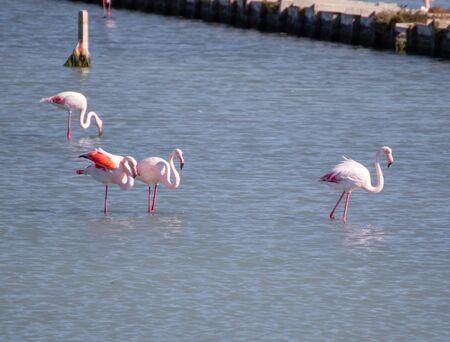 Ayvalik, Turkey - right beside the wonderful village of Ayvalik, the small St. Tuka Tuz Gölü hosts one of the main flamingos colonies in Turkey
