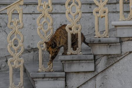 Istanbul, Turkey - many places in the World display cats colonies, but nothing is comparable to Istanbul, where cats are found basically at every corner of the city, and loved by the inhabitants Imagens