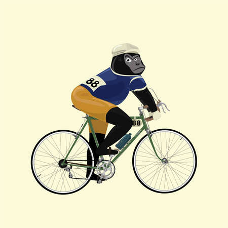 gorilla in vintage bike racer costume ride a bicycle