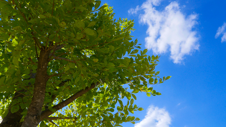 tropical evergreen forest: green plant and blue sky background Stock Photo