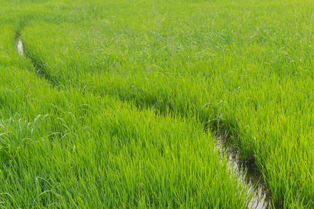 Ricefield with Curve Channel 免版税图像 - 54211877