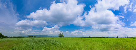 Green Grass Field Meadow with Blue Sky  and White cloud summer day