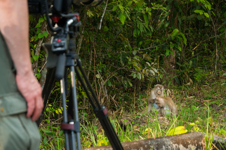 Caucasian Cameraman or photographer take Video Clip or Photograph of Northern Pig-Tailed macaque at Khaoyai National Park as Outdoor Lifestyle Concept. 免版税图像