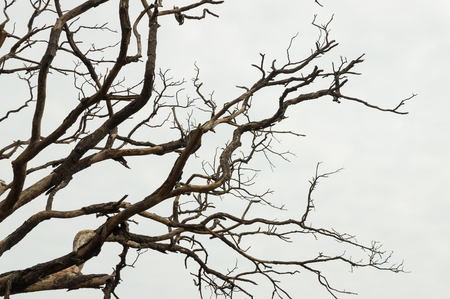 Branch of Dead Tree over White Sky Background as Horror or Spooky Scene Concept