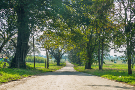 Country Road in Green Environment such as Field, Tree and Foilage in Morning sunshine as Beaty of Nature Concept.  免版税图像