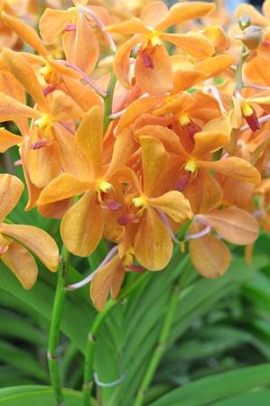 illustration: Orange orchids flower in a garden