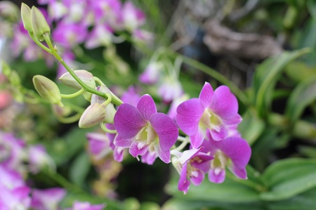illustration: Pink orchids in a garden